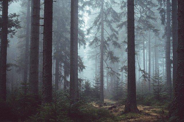 Parquet y deforestación